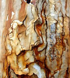 tree bark has beautiful color and texture inspiration Natural Forms, Natural Texture, Patterns In Nature, Textures Patterns, Wabi Sabi, Arte Yin Yang, Art Grunge, Rust Never Sleeps, Peeling Paint