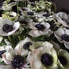 Many anemones. Many anemones.  Today's tongue twister.  Slowly opening - ready to be perfect for next week's wedding