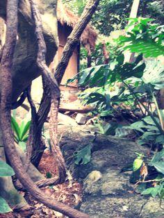 Rainforest!