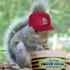 Rally Squirrel and Ted Drewes. Sums up STL!!
