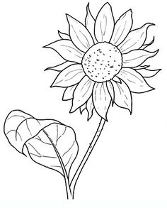 Sunflower Drawings of flowers for teens and adults