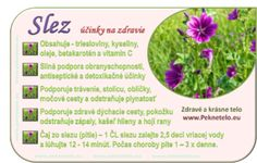 info slez Dieta Detox, Natural Health, Life Is Good, Healing, Lifestyle, Nature, Flowers, Plants, Food