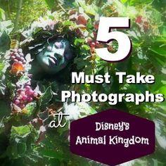 5 Must take photographs to Get at Disney's Animal Kingdom. Walt Disney World Photos. DAK