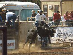 Rodeo - Payson, AZ