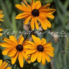photo-of-the-day www.RaisingJane.org/journal