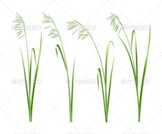 Green Grass, Vector  #GraphicRiver         Green grass, vector illustration     Created: 14May13 GraphicsFilesIncluded: JPGImage #VectorEPS Layered: No MinimumAdobeCSVersion: CS Tags: abstract #beautiful #blade #clean #color #concept #ecology #environment #field #fresh #freshness #garden #grass #green #growth #horizontal #illustration #isolated #land #lawn #meadow #natural #nature #pattern #plant #season #spring #summer #vector #white