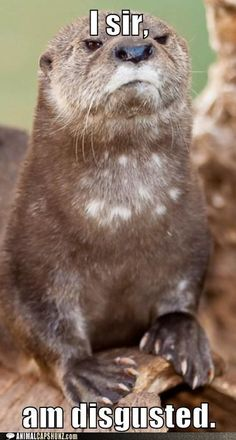 Otterly disgusted.