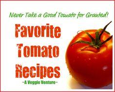 Never Take a Good Tomato for Granted: twelve favorite tomato recipes ♥ AVeggieVenture.com