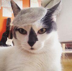 20隻貓咪為了模仿知名商業大亨,紛紛要求主人把自己弄成「飄逸川普頭」!% 照片