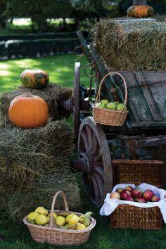 #harvestday Pumpkin, Events, Vegetables, Food, Pumpkins, Essen, Vegetable Recipes, Meals, Squash