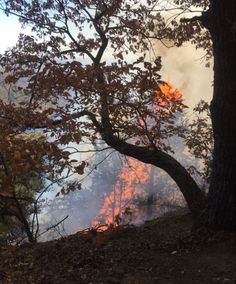 November 14, 2016  | 1,000+ evacuated as NC mountain wildfires grow to nearly 46,000 acres  -    http://wncn.com/2016/11/14/1000-evacuated-as-nc-mountain-wildfires-grow-to-nearly-39000-acres/