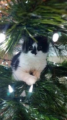 IT'S CHRISTMAS?!