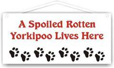 14 Best Maltipoo images in 2015 | Maltipoo, Cute puppies, Adorable