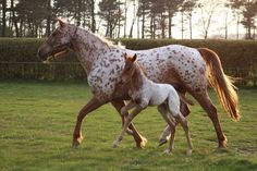 https://flic.kr/p/233Sv8D | Mother and foal