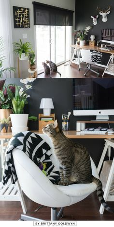My Fall 2016 One Room Challenge Reveal! This is my modern multi-use space, which we use for my office space, our dining space, and kitten cuddles   black wall, white faux taxidermy, black and white decor, black and white office space, sherwin-williams tricorn black