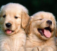 Perros cachorros