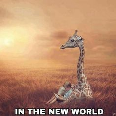 Chilling with a giraffe. Life In Paradise, Paradise On Earth, Jehovah Paradise, See Yourself, Family Worship Night, Photoshopped Animals, Giraffe Pictures, Animal Pictures, Paradise Pictures