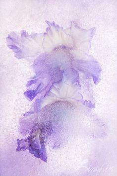"""Floral Fine Art Print """"Beauty Pageant"""" on WaterColor Paper. Fine Art Photography. Unique Fine Art Artwork, Wall Art Decor."""