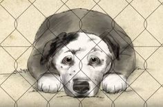 Shelter Dog Saves Man's Life: The life changing story of Eric and Peety, beautifully told in six minutes. We promise, it will make your Wednesday. This is why we love dogs. #shelterdog #DogIsGood #MarathonFinisher #TheNewBarkerDogMagazine #TheArtOfDog #ShelterDogsRock #MutualRescue