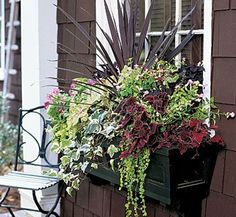 Image Search Results for summer window box ideas Container Plants, Container Gardening, Window Box Flowers, Plants For Window Boxes, Fall Flower Boxes, Window Planter Boxes, Planter Ideas, Fall Flowers, Garden Windows