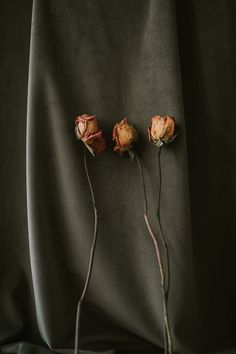 Still life photography three dried roses against olive velvet Still Life Photography, Be Still, Roses, Velvet, Brooch, Jewelry, Table, Top, Jewlery