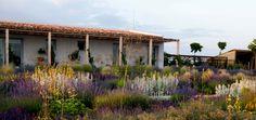 New Wave Planting. Dry Garden, Autumn Garden, Garden Fun, Garden Ideas, Plant Design, Garden Design, Amazing Gardens, Beautiful Gardens, California Garden