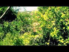 Bastet et Yog Sothoth - YouTube