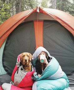Travel Tips: Training Your Pet For Travel - Dogtime Travel Tips: Training Your Pet For Travel - Dogtime,Best Indoor Dog Potty For Large Dogs dog adventure photography food gear ideas photography camping Camping Photography, Adventure Photography, Equine Photography, Camping Life, Camping Ideas, Outdoor Camping, Camping Cooking, Camping Hacks, Family Camping