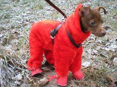 комбинезон-шубка для собачки | Страна Мастеров