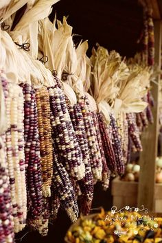 "purple corn..... read a nice episode on this in ""The Witch of Blackbird Pond"" by E.G.Speare looooong time back."