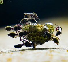 Insect Photography, Africa