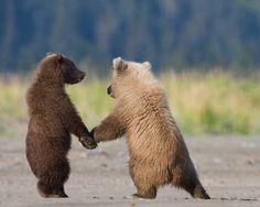 Bears holding hands
