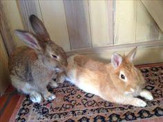 Winny en Redly in onze keuken