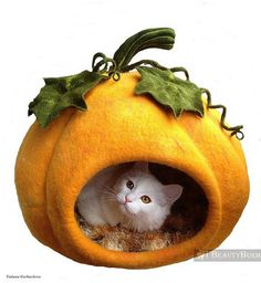 We just love cat stuff like this felted cat cave.  It's shaped like a pumpkin so it's not only a cute cat bed but it's festive Halloween decoration as well.  Great holiday pet stuff.:
