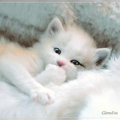 Things that make you go AWW! Like puppies, bunnies, babies, and so on. A place for really cute pictures and videos! Cute Kittens, Kitten Wallpaper, Most Beautiful Horses, Cute Baby Animals, Cute Love, Cute Pictures, Cat Lovers, Dog Cat, Creatures