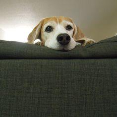 Did I hear Bacon?