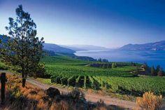 Okanagan Valley wine region, BC, Canada beautiful shot