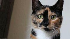 La couleur des chats trahit-elle leur (mauvais) caractère? | Slate.fr