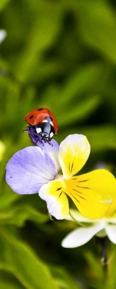■⊙■⊙■⊙■ Ladybug ■⊙■⊙■⊙■