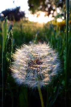 Delicates in sunset | Taija Oksanen on 500px