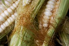 Cusco s Giant White Corn Seeds ~ WORLD S LARGEST RARE GIANT CORN ~ 1 lb. Seeds