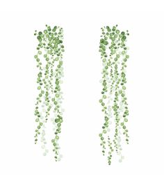 Grow a lacy wall of greenery an enjoy zero maintenance with the RoomMates String of Pearls Vine Peel And Stick Wall Decals . Vine Drawing, Plant Drawing, Wall Drawing, String Of Pearls, Plants Vs Zombies, Vine Wall, Unique Wall Decor, Arte Floral, Cool Plants