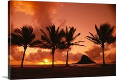 Greg Vaughn Premium Thick-Wrap Canvas Wall Art Print entitled Hawaii, Oahu, Sunrise At Chinaman's Hat, Palms Silhouetted, None