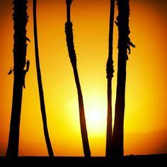 Vertikal sunset