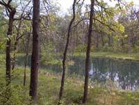 Woodland garden areas