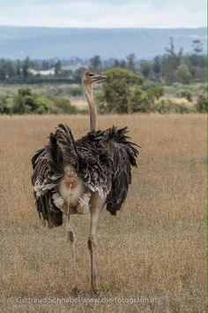 Funny Animal Faces, Funny Animals, Ostriches, Whisper, Farming, Poultry, Camel, Flora, Nature