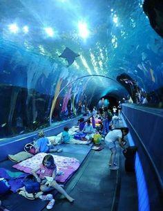 Georgia Aquarium is an Aquarium in Atlanta. Plan your road trip to Georgia Aquarium in GA with Roadtrippers. Georgia Aquarium, Places To Travel, Places To See, Vacation Places, Dubai, Beautiful Places, Wonderful Places, Funny Pictures, Random Pictures