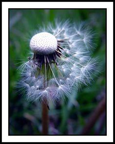 Lingering Wishes: Photo by Photographer Vicki Passmore - photo.net