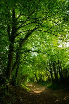 Halnaker path, West Sussex, England by Richard Paterson.::|cM