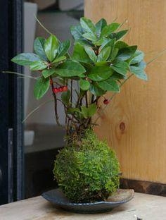 Make a Kokedama Moss Garden - Better Homes Moss Garden, Lawn And Garden, Indoor Garden, Indoor Plants, Ikebana, Art Floral Japonais, Japanese Plants, String Garden, House Plants Decor